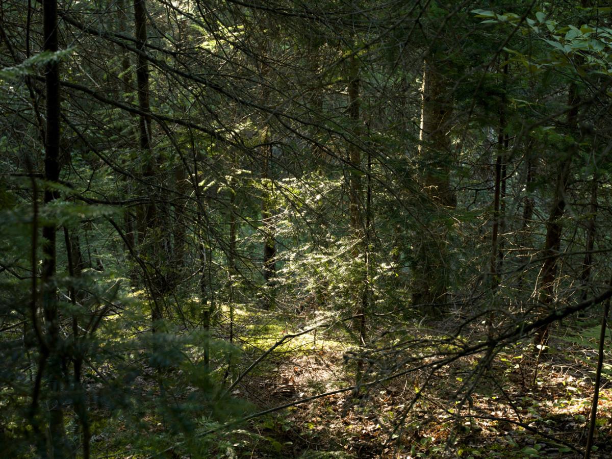 Normand Rajotte, sans-titre, tirée de la série « Hors-piste » (titre de travail, série en cours), 2013, impression au jet d'encre, 102 x 137 cm.